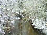 Stream in spring... er winter.